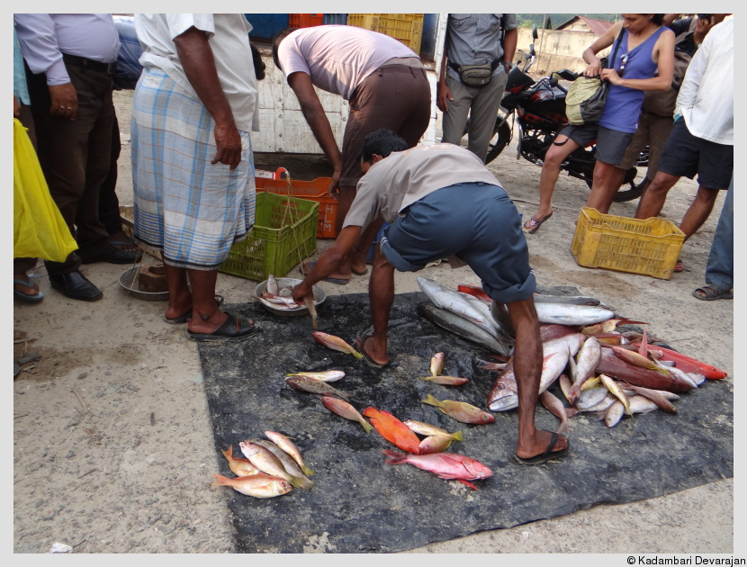 /photos/andamans_c/fish_market.JPG