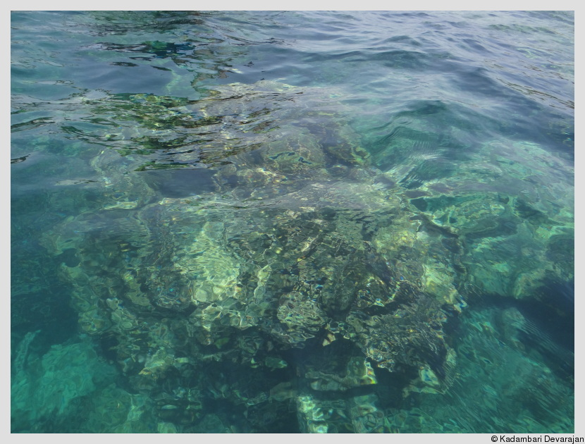/photos/andamans_c/fringe_reef2.JPG