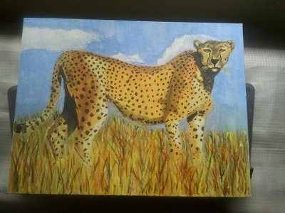 /photos/art/cheetah1_sc.jpg