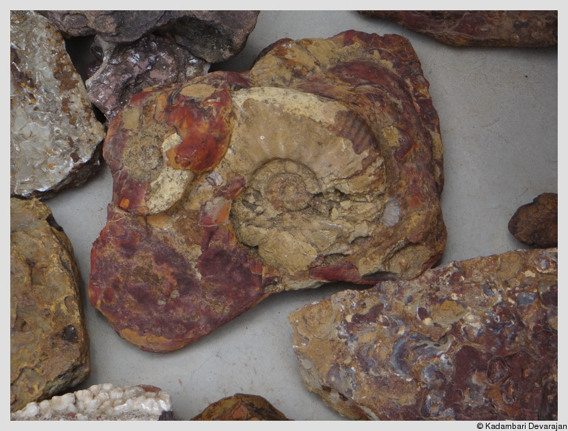 /photos/banni/ammonite.JPG