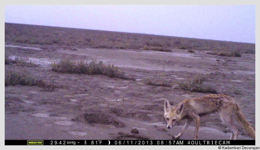 /photos/banni/desert_fox1.png