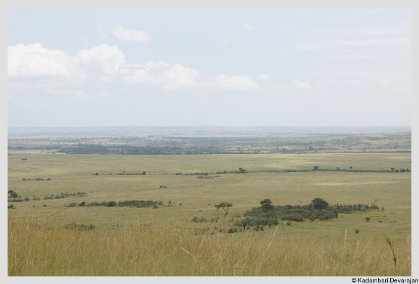 /photos/masai_mara_c/ele/mm3.JPG